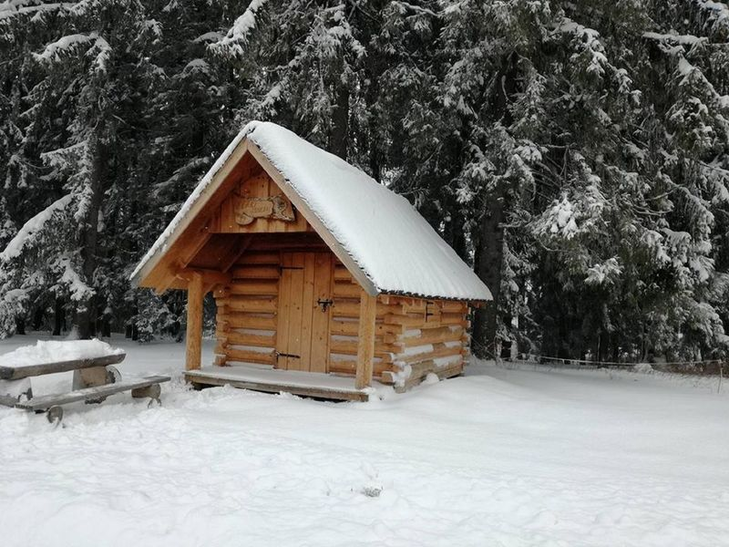 Cold Temperature Forest Frozen House Log Cabin Roof Snow Snowing Tree Weather Winter Wood - Material