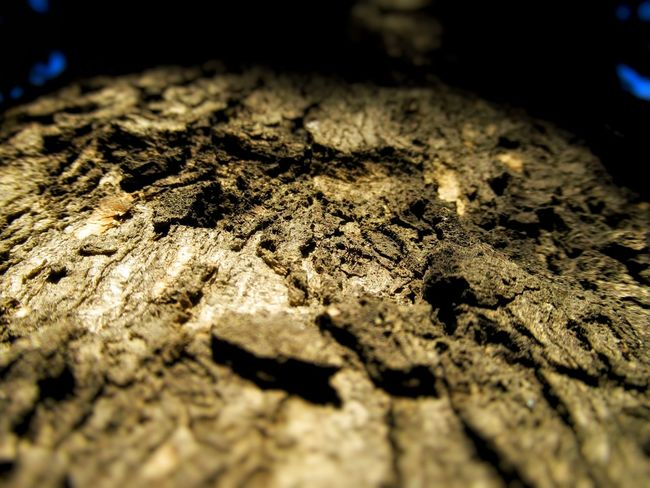 Ant in crater like bark of a tree Nature Photography Untouchednature Low Angle Photo Nature In Wild Natural Pattern Bug's View Natural Light Ant Photography Barks Of A Tree Bark Texture Sunlight And Shadow No People Close-up Day Outdoors Nature