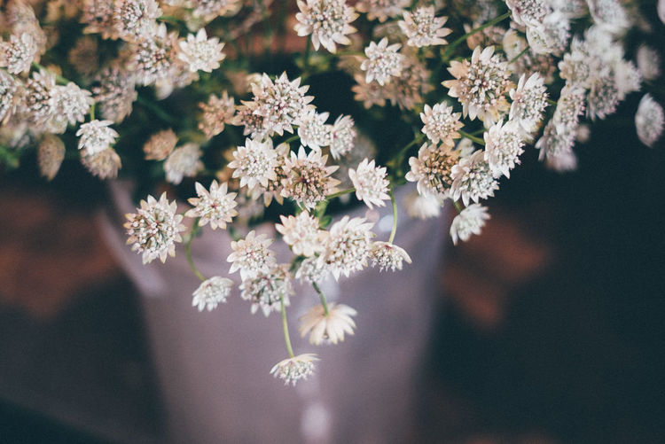 Beauty In Nature Close-up Cold Temperature Day Flower Flower Head Flowers Flowershop Fragility Freshness Growth Nature No People Outdoors Plant Snow Snowflake Tree Winter