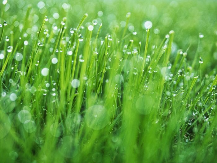 Freshness 💚 Green Color Plant Wet Drop Growth Beauty In Nature Water Freshness Nature No People Close-up Outdoors Grass Fragility Rain