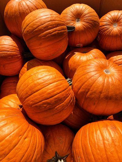 Pumpki Food And