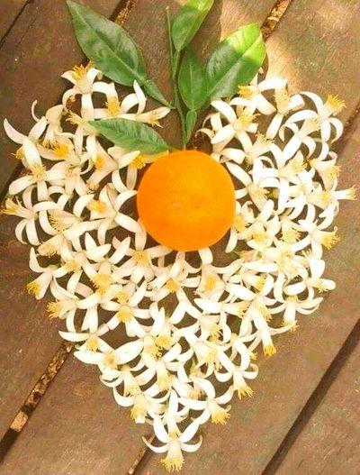 The KIOMI Collection portakal çiçeği&portakal