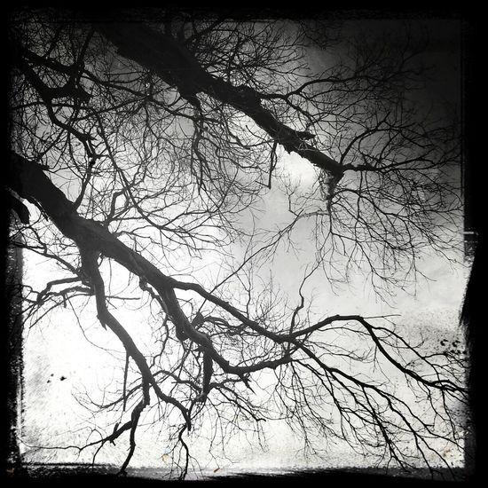 Even the trees breathe.
