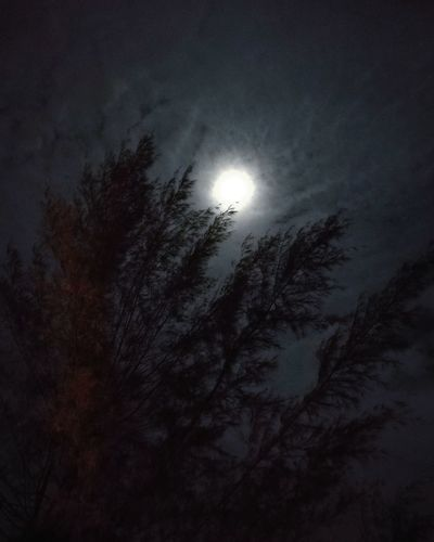 Moonlight Fulmoon Sky Night Tree Moon Beauty In Nature Scenics Astronomy Silhouette Low Angle View Nature No People Outdoors Growth Tranquility Branch