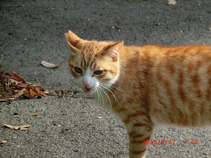 野良猫 Park Cat 明石公園