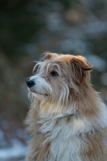 Winter Animal Hair Animal Themes Close-up Cold Cute Day Dog Domestic Animals Focus On Foreground Forest Mammal Nature No People One Animal Outdoors Pet Pets Wood - Material