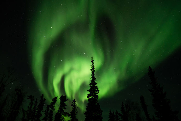 Northern lights (Aurora borealis) with starry sky above forest, Yellowknife, Canada Night Green Color Beauty In Nature Space Astronomy Star - Space Scenics - Nature Tree Sky Plant Tranquility Low Angle View No People Tranquil Scene Nature Idyllic Aurora Polaris Majestic Awe Cold Temperature