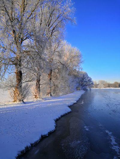 Frozen river amidst trees against blue sky