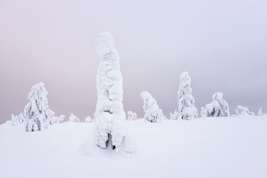 Frozen Trees Beautiful Beautiful Nature Finland Nature Photography Travel Tree Trees Winter Wintertime Cold Cold Temperature Forest Forest Photography Frozen Nature Frozen Tree Frozen Trees Riisitunturi Snow Snow Load Travel Destinations Winter Trees Winter Wonderland Winterwonderland