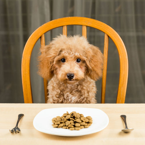 Close-up of dog on table