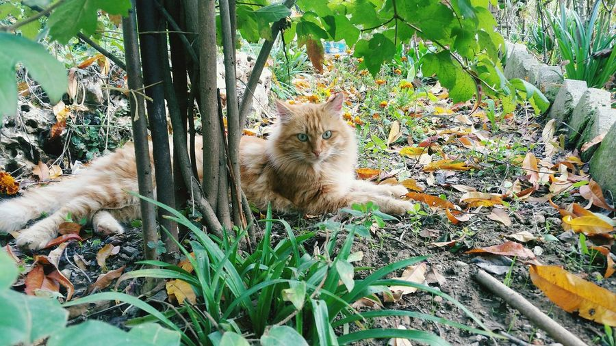 Portrait of cat sitting by plants