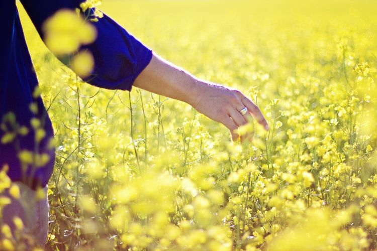 Nature On Your Doorstep Eye Em Nature Lover EyeEm Best Shots - Nature Nature_collection Nature Photography Check This Out Alberta Canola Field Nature Capturing Freedom Market Bestsellers April 2016 Bestsellers
