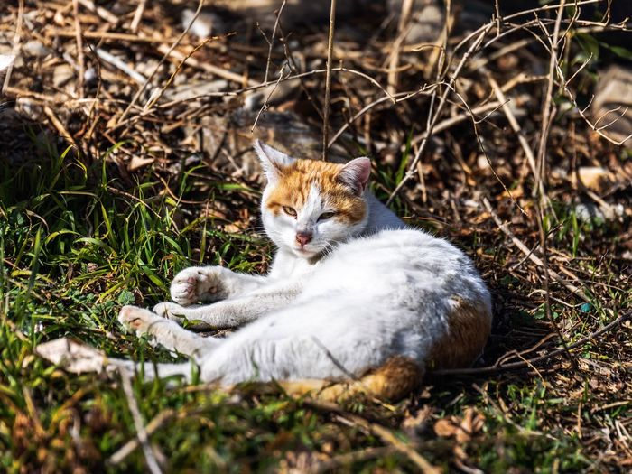 View of a cat lying on field