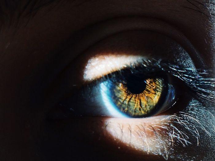 Close-up of brown human eye in darkroom