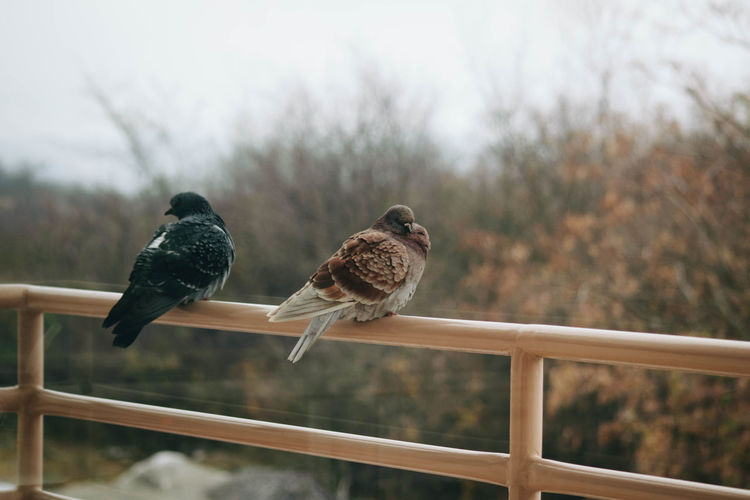 Bird Animal Themes Vertebrate Animal Animal Wildlife Animals In The Wild Perching Group Of Animals Focus On Foreground Railing Two Animals Day No People Nature Outdoors Tree Plant Togetherness Metal