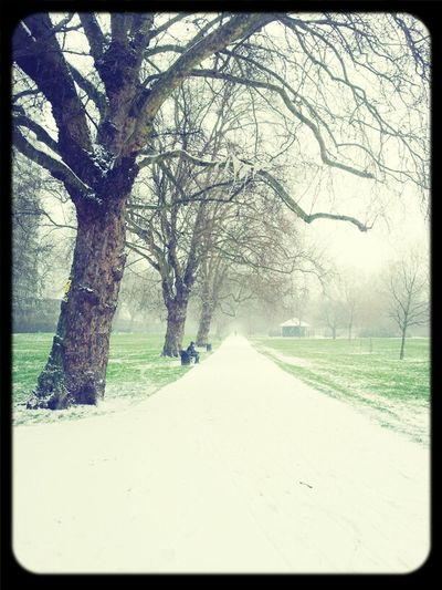 Nature Weather Trees Ice Winter Snow Cold London Park