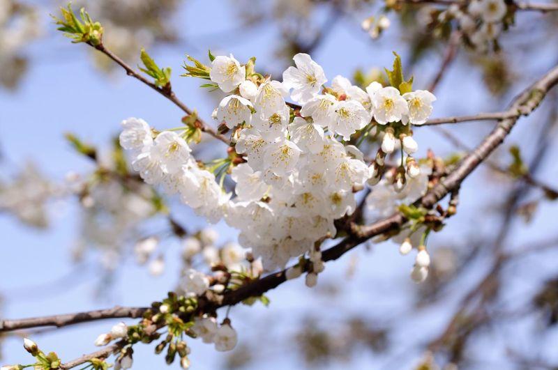 Spring Still