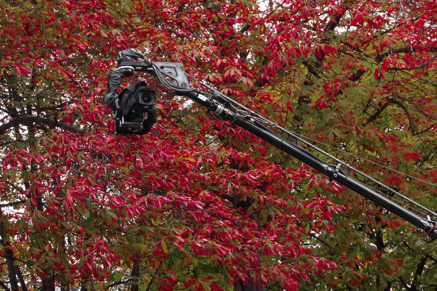 Action ! 🎥 Autumn Camera Fashion Filming Autumn Behindthescenes Day Fashionphotographer Filmaking Filmmaking Filmset Filmshoot Frenchphotographer Instamovie Moviemaking Movıe Nature No People Onset Ontheset Outdoors Pfw Red Redleafs Tree
