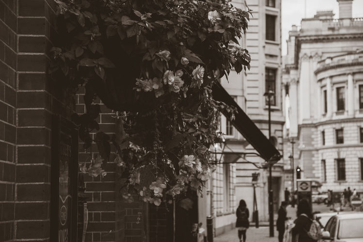 Building Exterior Built Structure Architecture Plant Flower Flowering Plant Day Building City Nature Real People Outdoors Focus On Foreground Growth Street Incidental People Tree People Leisure Activity Fragility Eyeem Travel London Discover Your City