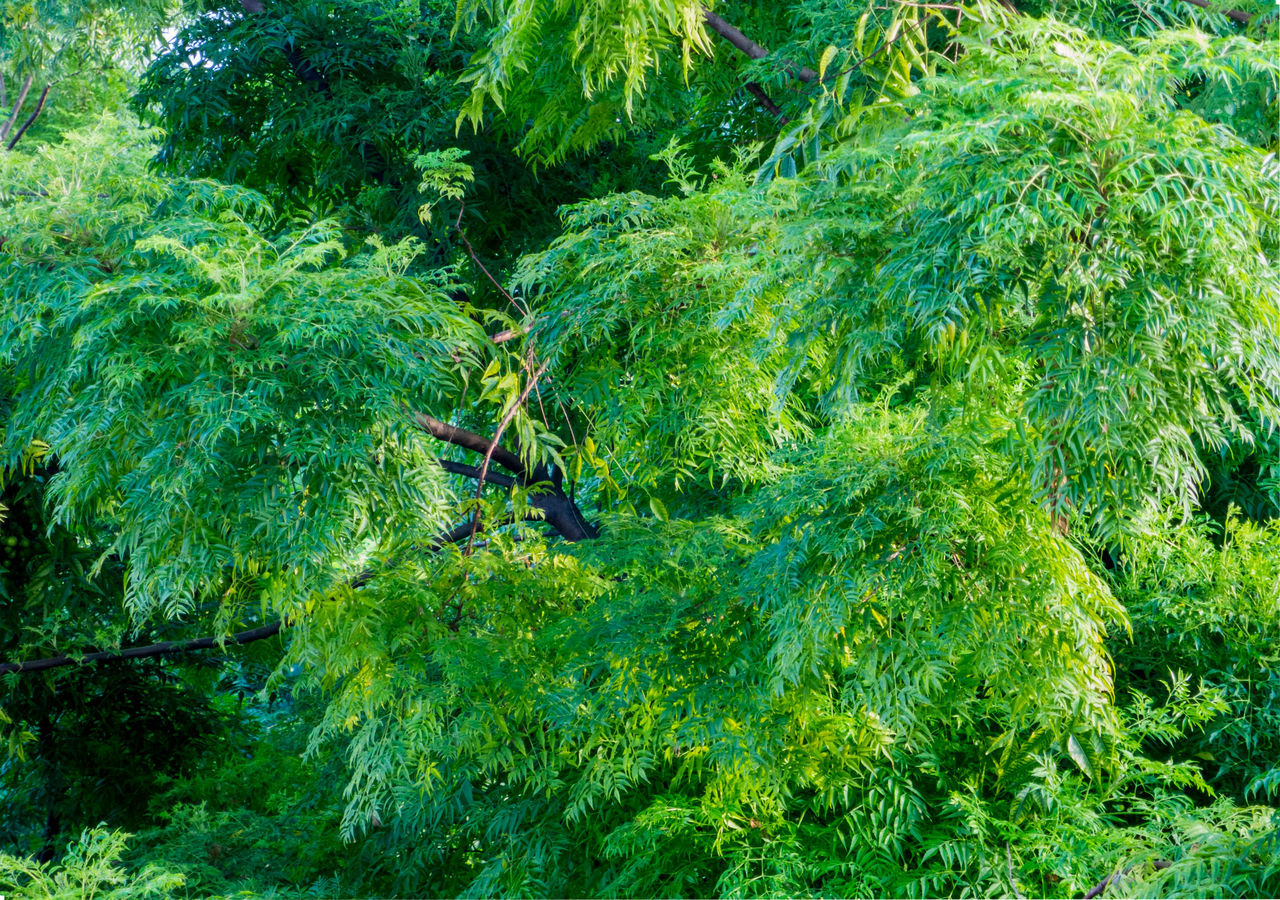 green color, lush foliage, plant, growth, nature, no people, leaf, outdoors, day, beauty in nature, tree, freshness