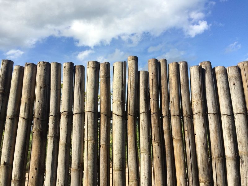 Bamboo background with sky Bamboo Close-up Cloud - Sky Day Fence Full Frame Garden In A Row Large Group Of Objects Lines Low Angle View Man Made Object Outdoors Protection Repetition Safety Sky Stick Texture Tree Wall Wood Wooden