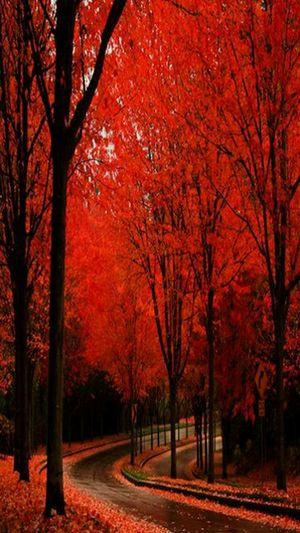 Crimson Trees Road