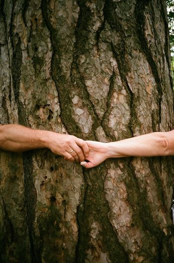 Embrace Bark Beauty In Nature Botany Brown Close-up Couple Embracing Green Color Growth Holding Hands Marriage  Nature Ring Scenics Textured  Togetherness Tranquil Scene Tree Tree Trunk Trust
