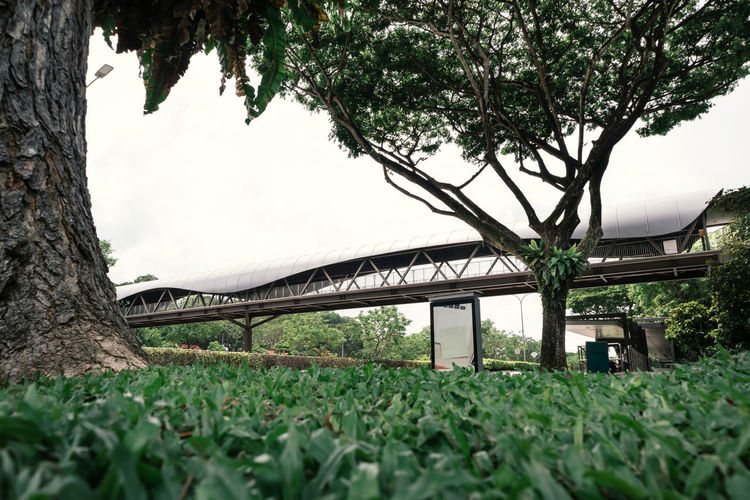 Low angle view of bridge amidst trees against sky