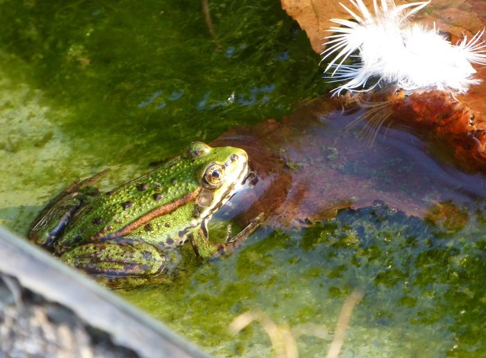 Frogs Sunbathing At The Pond Error As Creation Water Nature Relaxing With Little Frogs At The Pond Last Days Of Summer Favorite Place Pond Life