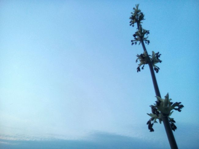 Tree Low Angle View Palm Tree Growth Nature Blue Clear Sky Sky No People Outdoors Day Beauty In Nature Close-up