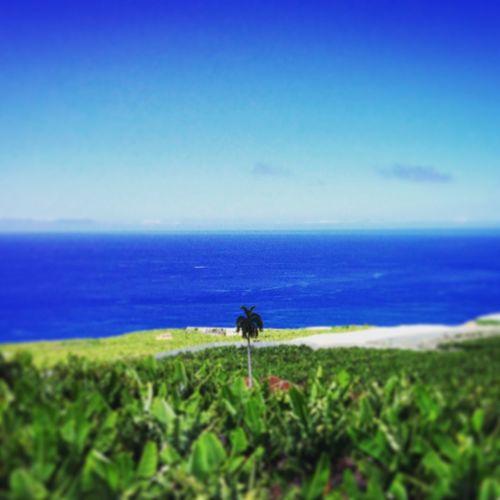 Banana Tree Plant Platano Palm Tree La Isla Bonita La Palma, Canarias SPAIN First Eyeem Photo Blue And Green Island View To The Sea Banana Leaf Palm Trees