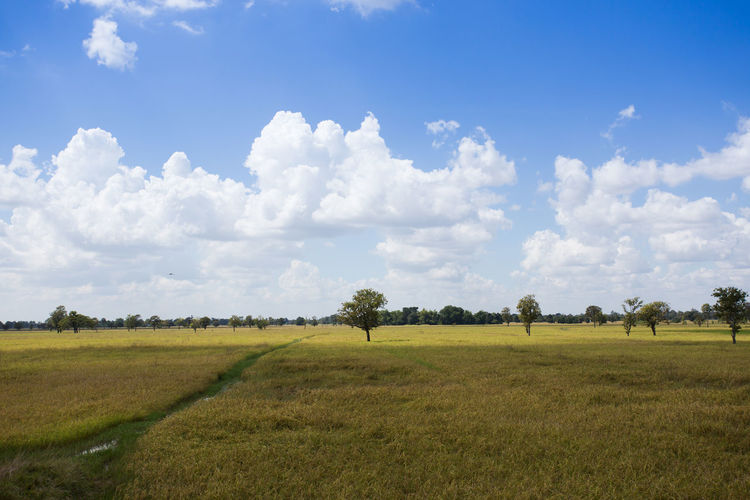 Beauty In Nature Cloud - Sky Day Environment Field Grass Green Color Growth Land Landscape Nature No People Non-urban Scene Outdoors Plant Rural Scene Scenics - Nature Sky Tranquil Scene Tranquility Tree