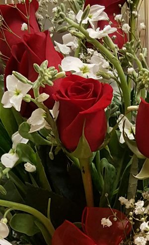 Beautiful roses and white stock Beauty In Nature Blooming Close-up Day Floral Arrangment Flower Flower Head Fragility Fragrant Flowers Freshness Growth Leaf Leaves On Roses Nature No People Outdoors Petal Plant Red Rose - Flower Valentines Day Is Coming White Stock