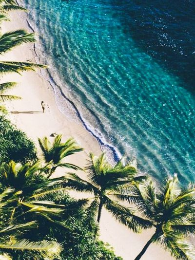 #like4like #likeforfollow #likesforlikes #followforfollow #follow4follow #tagsforlikes #l4l #followme #spamforspam #f4f #likeforlikealways #love #likeforlikes #spam4spam #recentforrecent #recent4recent #likeback #followback #follow #trocolikes #likes4like Beachphotography Sea Photography Themes Tree Water Wave Palm Tree Sea Beach Sand Frond Tropical Climate Sky First Eyeem Photo EyeEmNewHere
