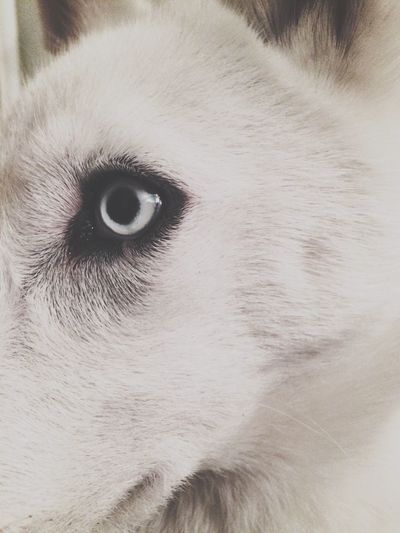 Focus Object One Animal Pets Domestic Animals Close-up Animal Head  Animal Themes Animal Body Part Mammal Animal Eye Dog No People Day Outdoors