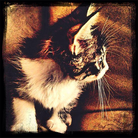 Cute Pets Cutecat Cat Mylittlecat ?❤️?
