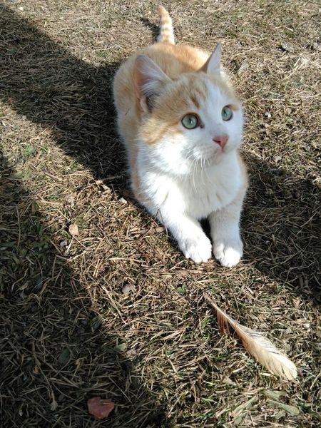 Senin sevimliliğini yerim ?? Cute♡ Cute Pets Sevimlisey😍 Cat❤💜💓💕 Kedi Aşkı