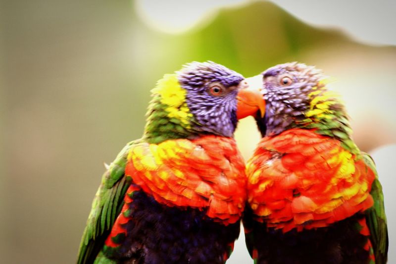 Love All The Way!!!!! Love Is In The Air Photography Love ♥ Lovelovelove Bird Photography I Love Parrots Birds_n_branches EyeEm Birds Birdlove LoveBirds ❤