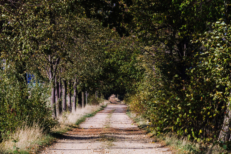 Die Allee Tree Direction Plant The Way Forward Nature Growth Transportation Day Footpath Outdoors Tranquility Road Treelined Diminishing Perspective No People Land Forest Beauty In Nature Tranquil Scene Dirt Tree Canopy