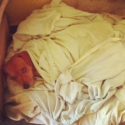 Tem alguém que não quer sair da cama hoje Pitoco