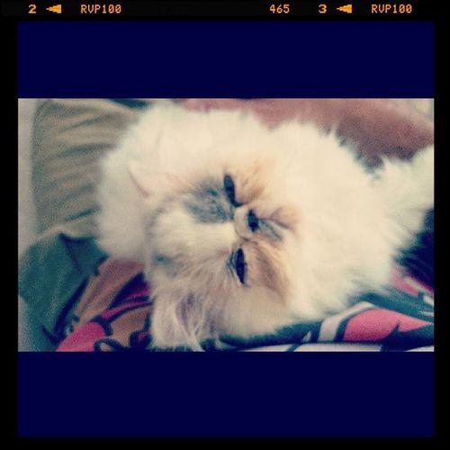 Just Aww Selene Kitten Nature
