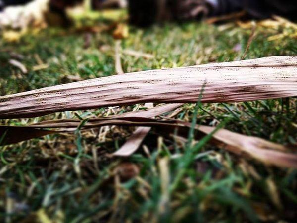 Wedneday Office Lunchbreak Timepass Garden Outdoorphotography Randomshot Grass Dry Fallenleaves Spring Oneplustech OneplusShot Myblr Insta_bengaluru Instapic Instagramers _soi Igers Igersoftheday Igers_world