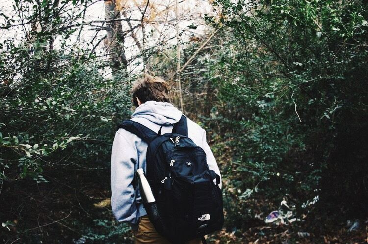 Rear View Backpack Hiking Tree Forest Walking Real People One Person Nature Day Adventure Men Outdoors Adult People Adults Only One Man Only Only Men