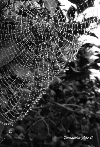 Best EyeEm Shot Spider Animal Themes Beauty In Nature Blackandwhite Close-up Day Drop Eye4photography  Eyembestshots Eyemphotography Focus On Foreground Fragility Freshness Growth Nature No People Outdoors Spider Web Water Web