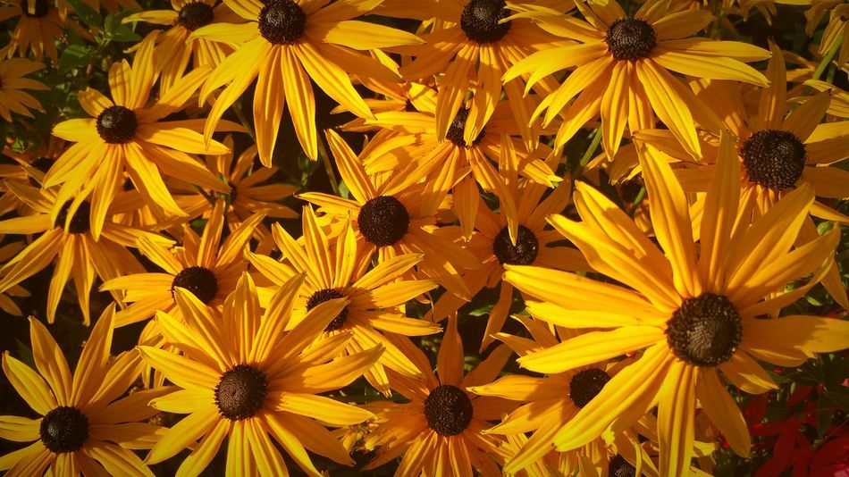 Flowers Flowers, Nature And Beauty Flower Photography Yellow Flowers Yellow Sunshine Yellow Colour Of Life Colour Palette Neighbors Garden