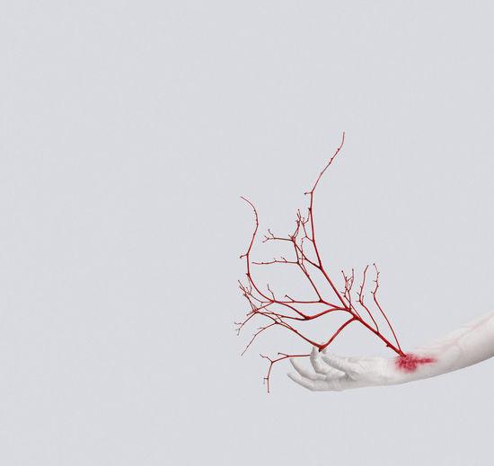 veins Creative