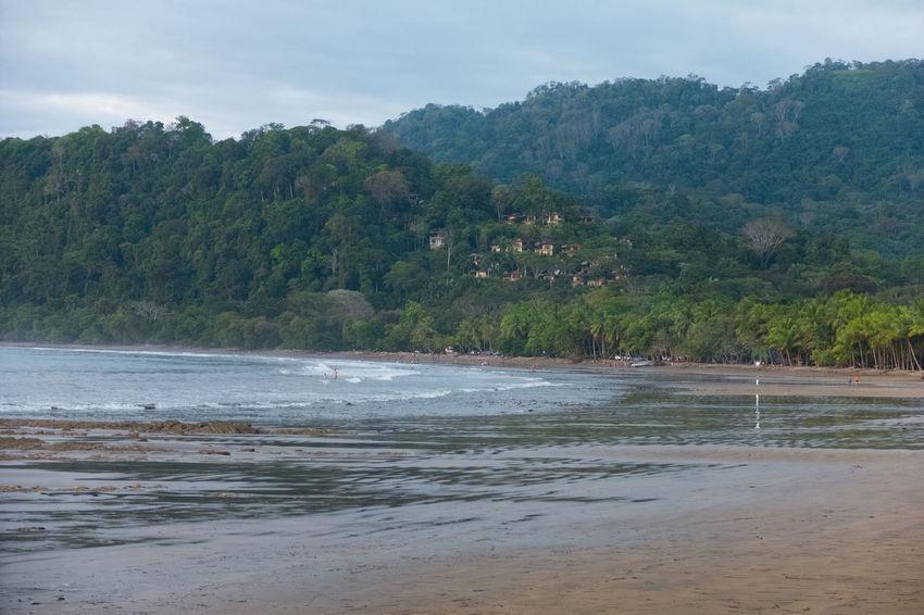 Costa Rica Nature Beach Beauty In Nature Jungle Ocean Wildlife