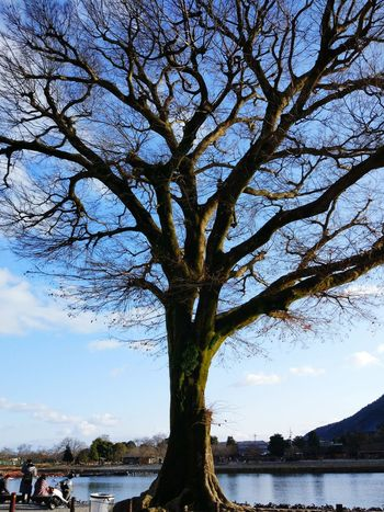 Tree Katsura-River Kyoto Kyoto, Japan Winter Sunnyday Life Blue Sky Nature
