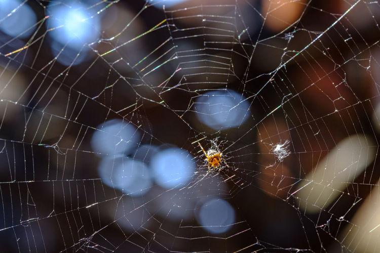 Spinnenbkoeh