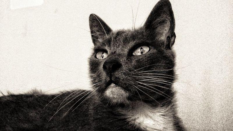 MiMio Cat Cats Gato Migatomodelo